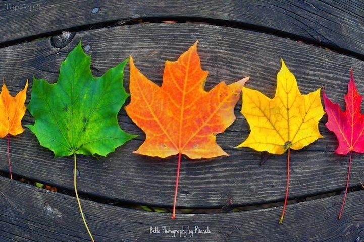 علت تغییر رنگ برگ درختان چیست؟