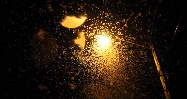 چرا حشرات مانند زمین به دور نور می چرخند؟