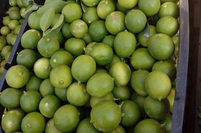 بهترین لیمو برای ابگیری کدام است؟